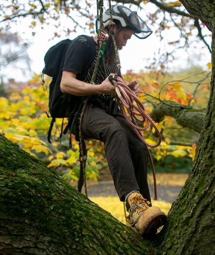 Alex The Tree Surgeon Modal Image